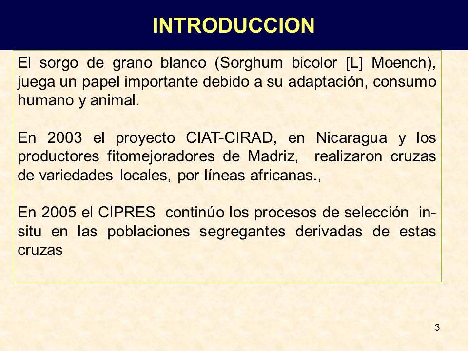 INTRODUCCION El sorgo de grano blanco (Sorghum bicolor [L] Moench), juega un papel importante debido a su adaptación, consumo humano y animal.